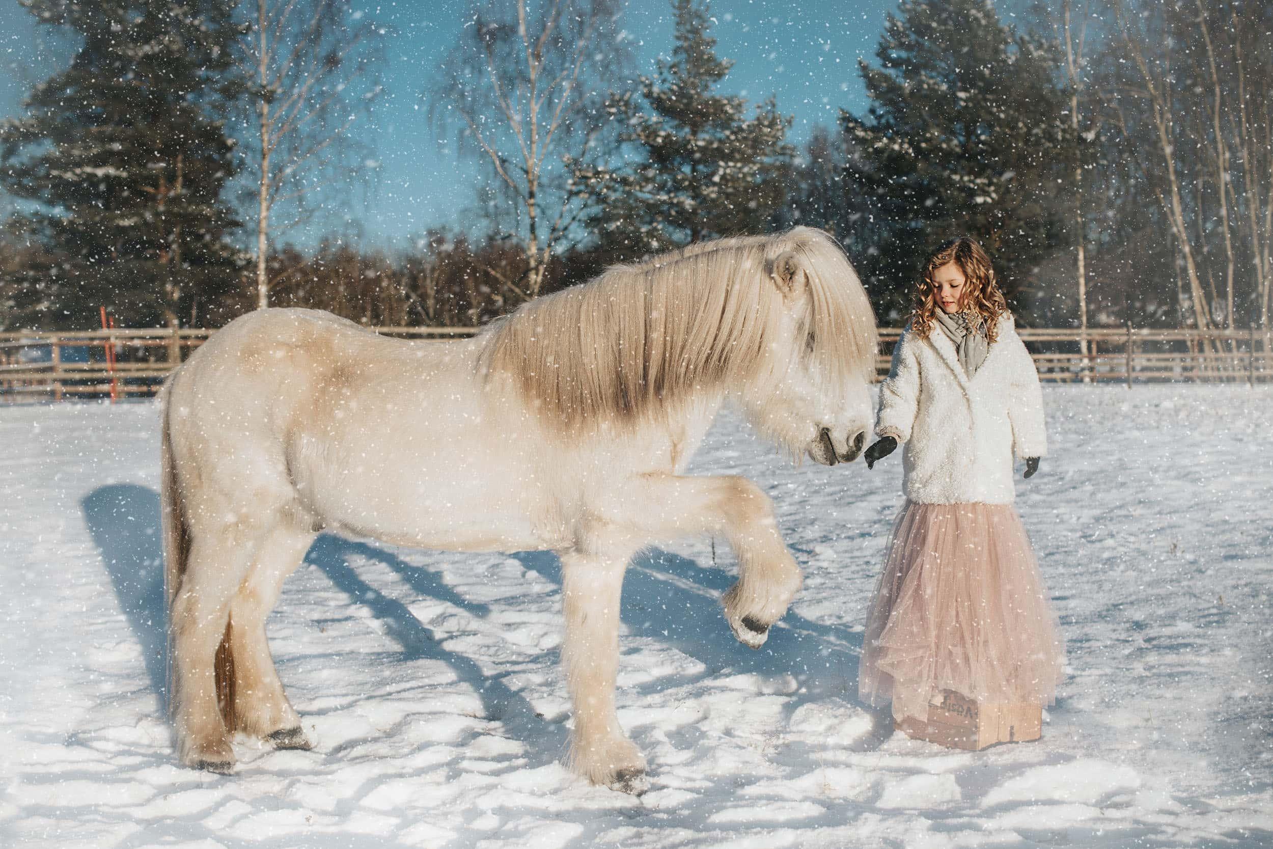 Vit islandshäst hälsar på flicka i prinsesskjol i snön